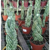 Vivero Zaharaplantas Plantas De Interior Plantas Y Flores